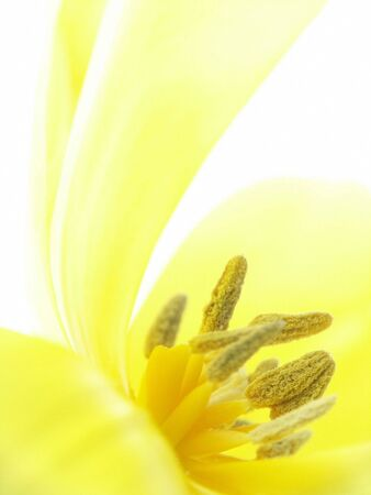 Close-up view of Yellow Flower. Soft-focus on Stamens.