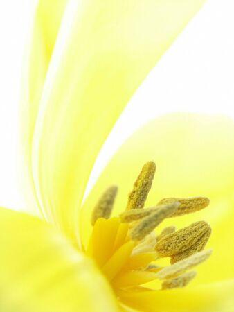 Nahaufnahme gelbe Blume. -Soft-Fokus auf Staubblätter.