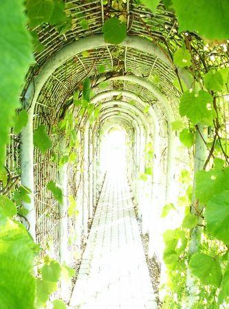 climbing plant: Tunnel. Stock Photo
