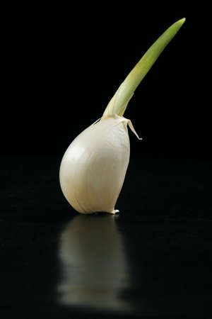 Garlic clove sprouting. Black background. Stock Photo - 756758