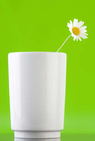 Chamomile Flower in white Mug with green background. photo