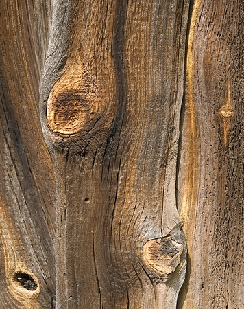Knots in an old Wood. Abstract background. Stock Photo