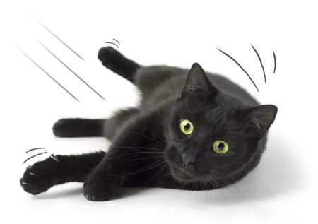 A Black Cat falling on the white background. Stock Photo