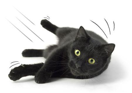 Eine schwarze Katze, die auf den weißen Hintergrund.