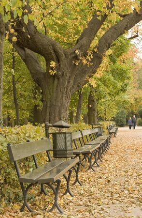 Autumn with golden Leaves around Bench.