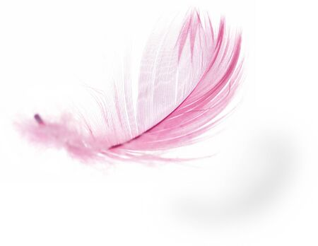 Pink Feather in soft-focus view. Close-Up. With white background - Isolated.