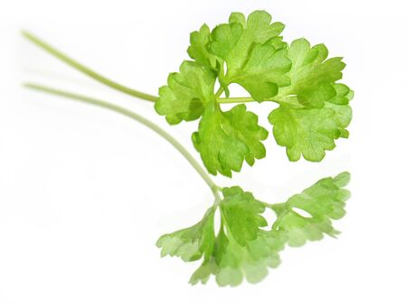Green Top of Parsley Reflected by Mirror.  Soft focus view. Stock Photo - 4563121