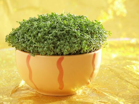Fresh Green Cress petals in orange Bowl against golden background. Soft focus view. Stock Photo - 4563181