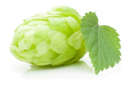 Close up view of single hop cone with leaf. Isolated on white. Stock Photo - 7767700