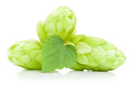 Close up view of fresh hop cones with leaf. Isolated on white. photo