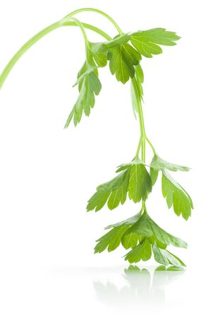 Sprig of fresh green Parsley over white background. Stock Photo - 7896817