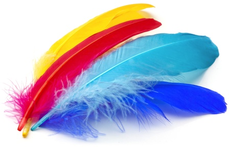 Four feathers of different colors on a white background. Stock Photo