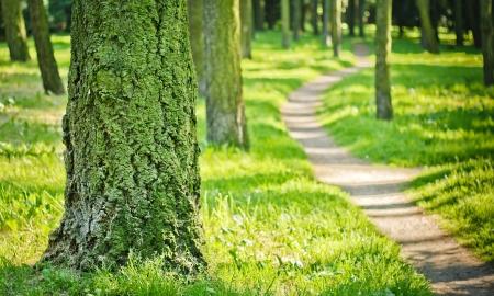 Forest path  Soft focus