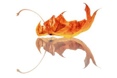 composite image: Golden Leaf