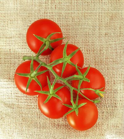 Tomatoes. Fresh red with twig on canvas.