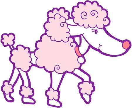 Poodle dog Vector Illustration