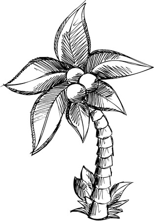 tree isolated: Sketchy Palm Tree Vector Illustration