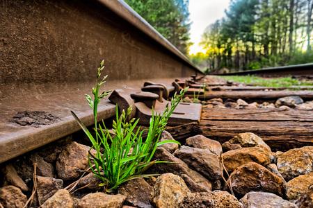 Green grass grows between rocks on rail road  tracks