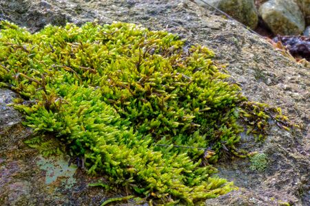 soggy: Green, soggy, moss on an old  rock Stock Photo