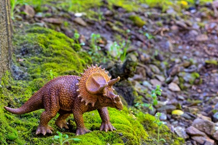 forced perspective: Triceratops walking on old moss with small  shrub