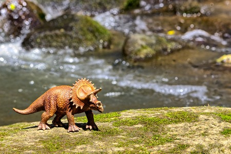 forced perspective: Triceratops walking on old rock with water in  background Stock Photo