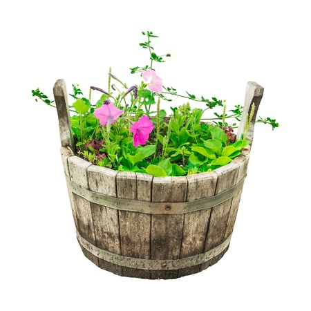set garden flowers in wooden bucket isolated on white background photo