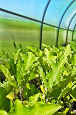 crops in the plastic greenhouse Stock Photo - 14742735