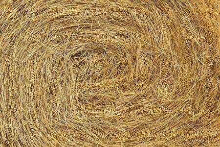 the texture of the hay after the harvest photo