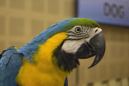 animals in the zoo: Hermoso color Ara loro en exhibici�n de mascotas