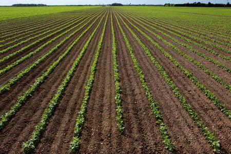 plowing: 1 campo de frijol Foto de archivo