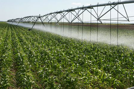 Irrigating a corn field 2 photo