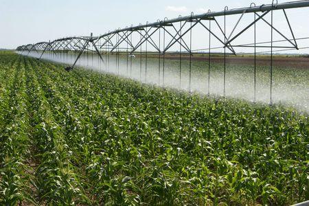 plowed field: Irrigating a corn field 2