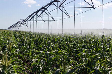 land management: Irrigating a corn field 3 Stock Photo