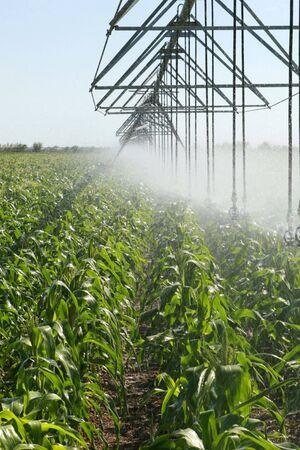 land management: Irrigating a corn field 4