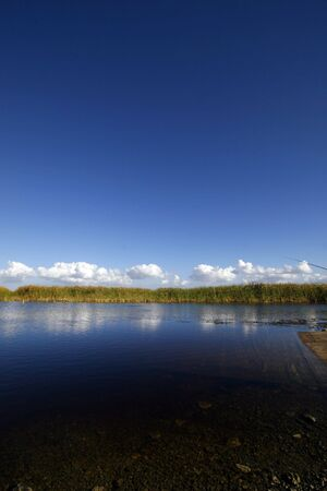 serrated: Marshes on the Everglades 1