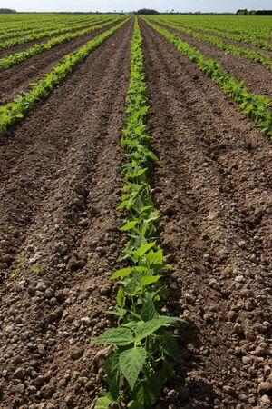 land management: Bean field