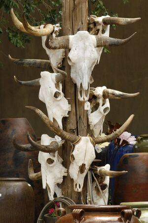 fe: Skulls for sale at Santa Fe Craft Market