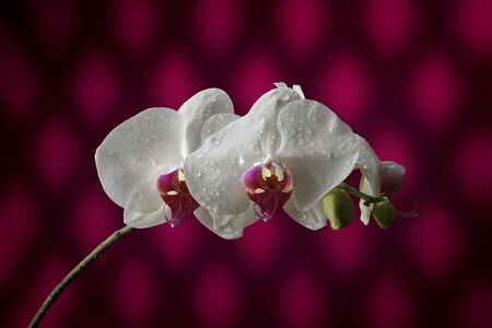 epiphyte: Orchid 3 Stock Photo