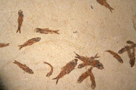 petrified fossil: Fossil fish pattern 1 Stock Photo