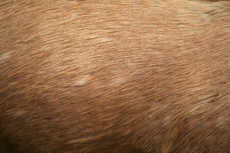 Deer fur gradient skin background photo