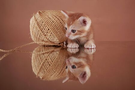 sisal: Baby kitten and sisal yarn Stock Photo