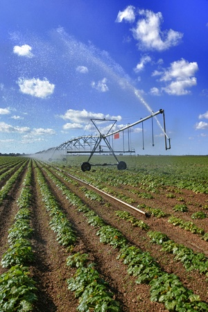 pivot: Large squash field and mechanical irrigation system Stock Photo