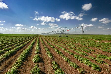 Large squash field and mechanical irrigation system Stok Fotoğraf