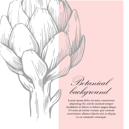 Natural background. Organic botanical design template. Hand drawn illustration of artichoke