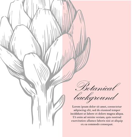 Natural background. Organic botanical design template. Hand drawn illustration of artichoke