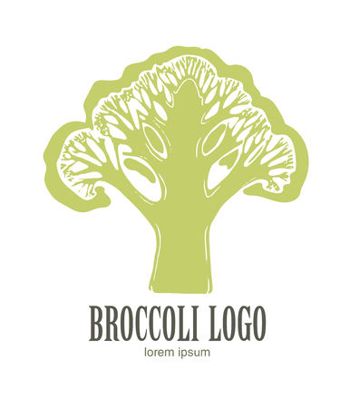 Broccoli  Organic food. Organic botanical design template. Hand drawn Vector illustration