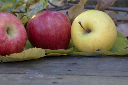 the color diversity of apples Stock Photo - 15924442