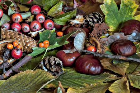underbrush: warm autumn scene with chestnuts, pine cones and underbrush Stock Photo