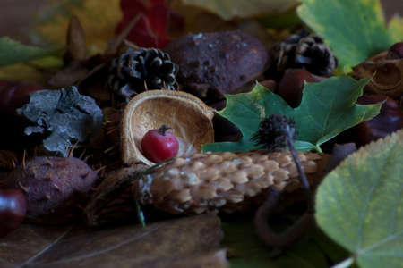 warm autumn scene with chestnuts and dried leaves