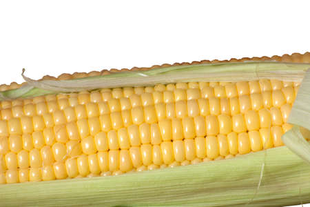 isolated fresh beautiful colored corn on a white background Stock Photo